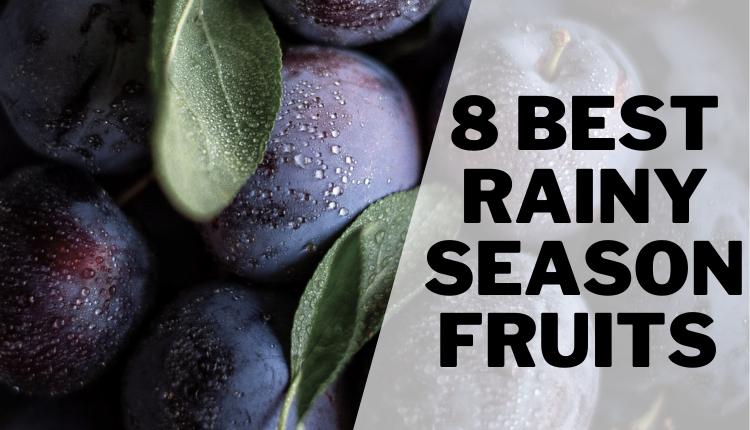 8 Best Rainy Season Fruits In India Best Rainy Season Fruits To Stay Healthy
